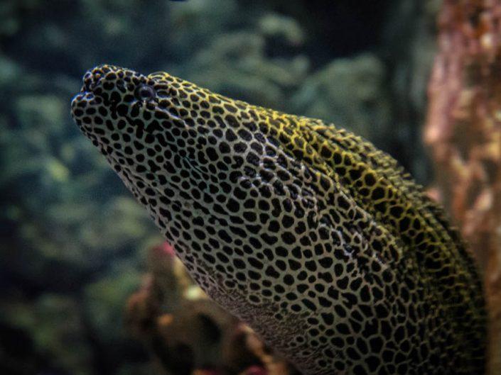 Meerwasseraquarium_ZellaMehlis
