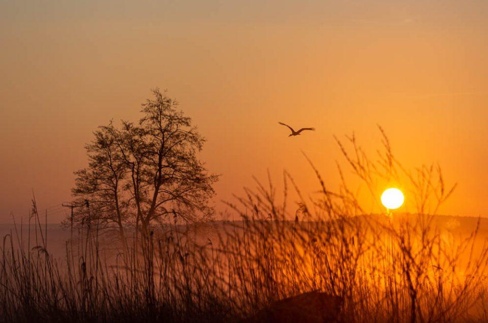 Sonnenaufgang an der Aisch